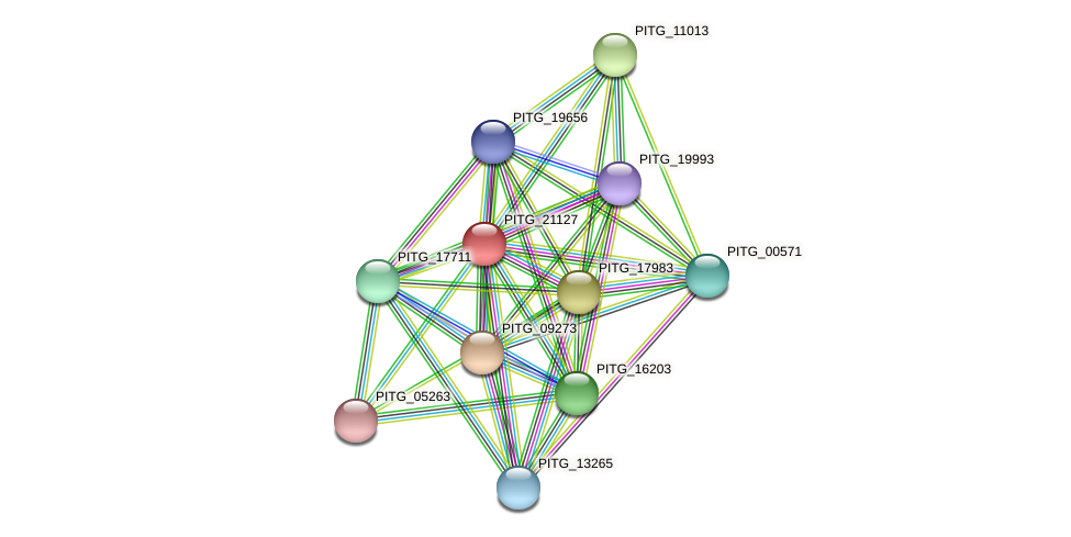 PITG_21127 protein (Phytophthora infestans) - STRING interaction network