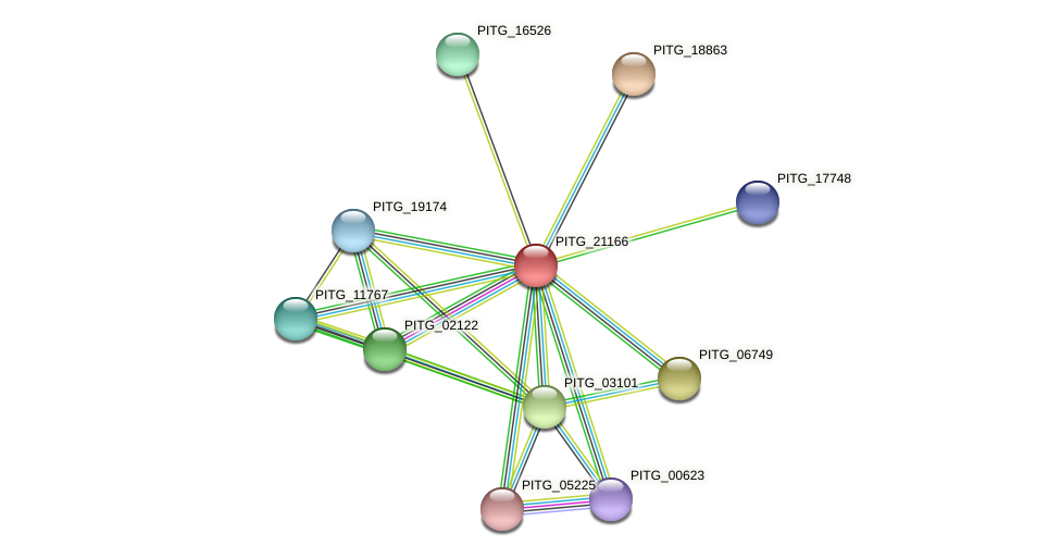 PITG_21166 protein (Phytophthora infestans) - STRING interaction network