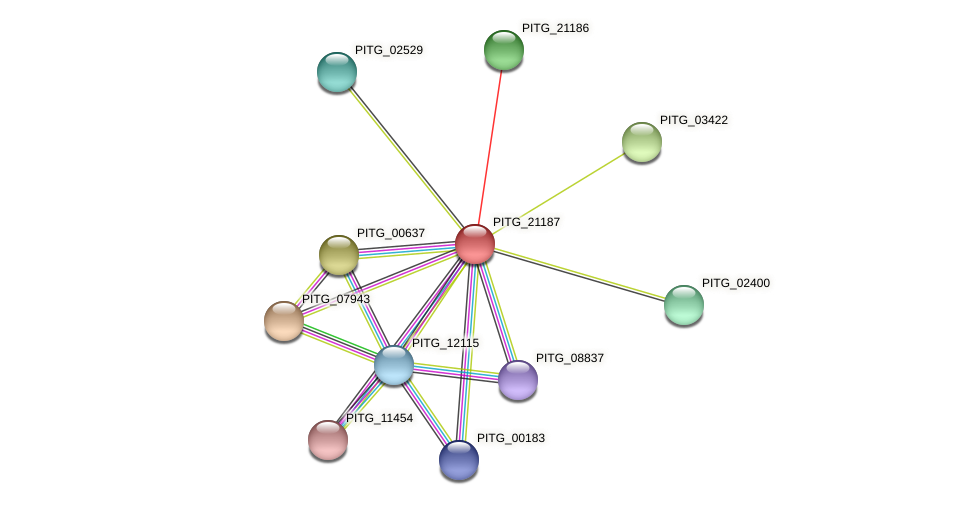 PITG_21187 protein (Phytophthora infestans) - STRING interaction network