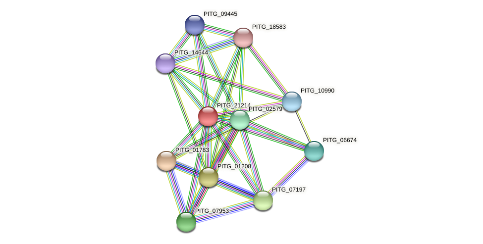 PITG_21214 protein (Phytophthora infestans) - STRING interaction network