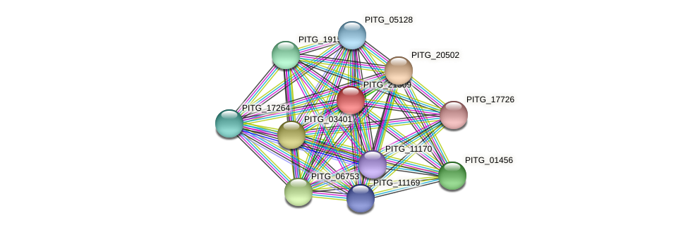 PITG_21309 protein (Phytophthora infestans) - STRING interaction network