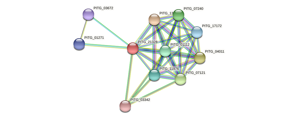 PITG_21328 protein (Phytophthora infestans) - STRING interaction network