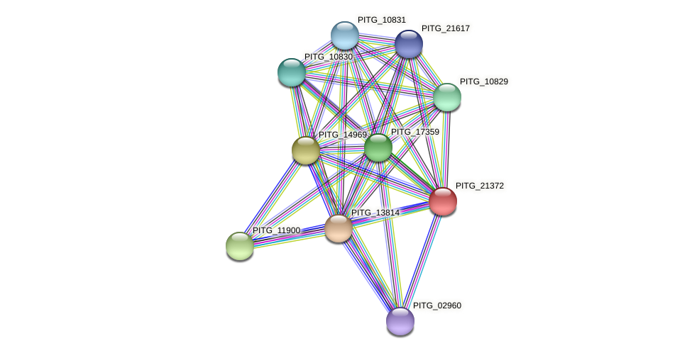 PITG_21372 protein (Phytophthora infestans) - STRING interaction network