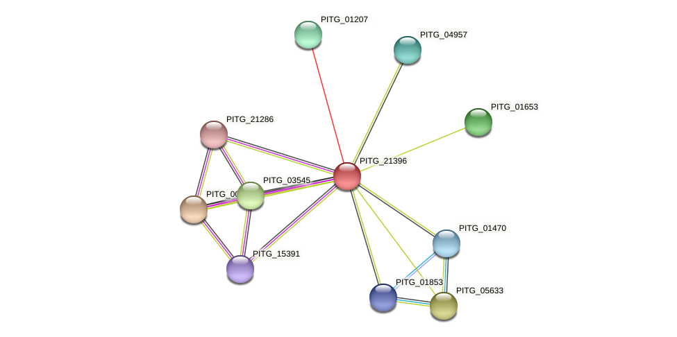 PITG_21396 protein (Phytophthora infestans) - STRING interaction network