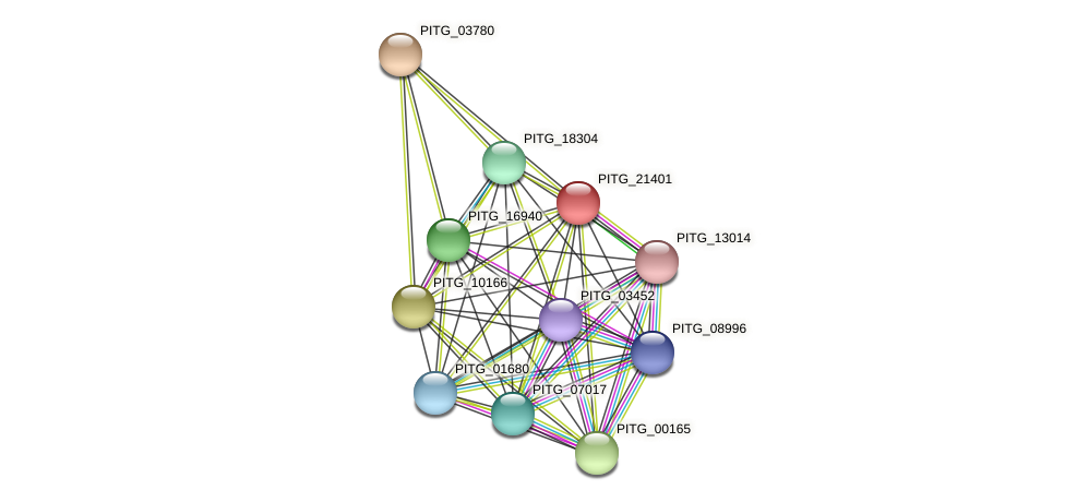 PITG_21401 protein (Phytophthora infestans) - STRING interaction network