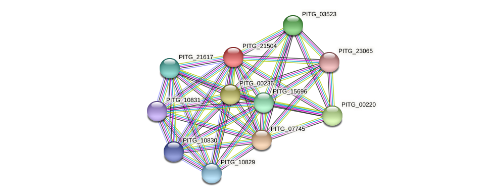 PITG_21504 protein (Phytophthora infestans) - STRING interaction network