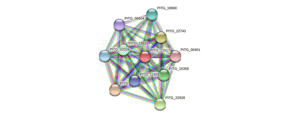PITG_21517 protein (Phytophthora infestans) - STRING interaction network