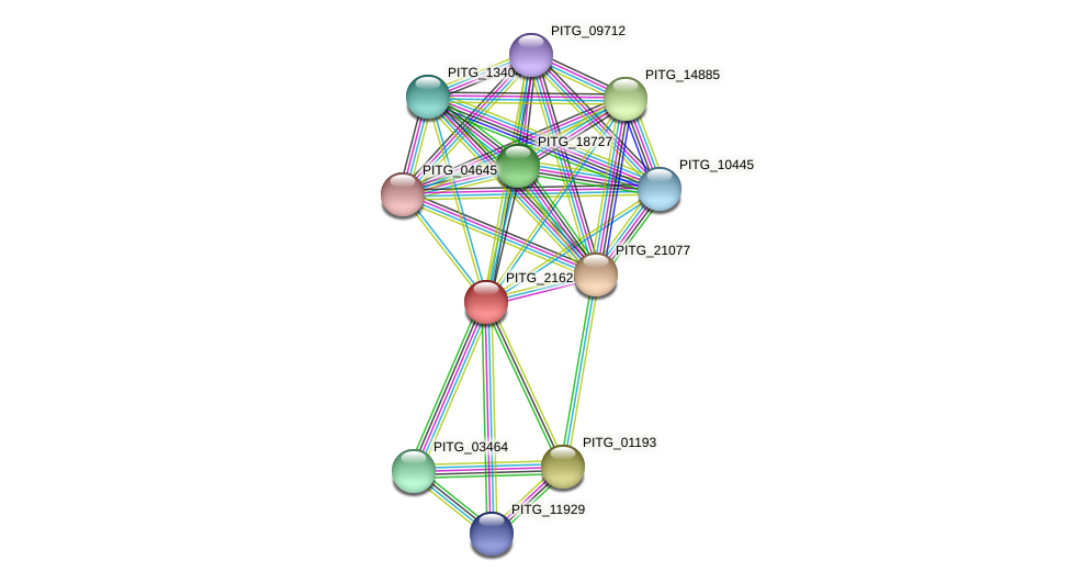 PITG_21620 protein (Phytophthora infestans) - STRING interaction network