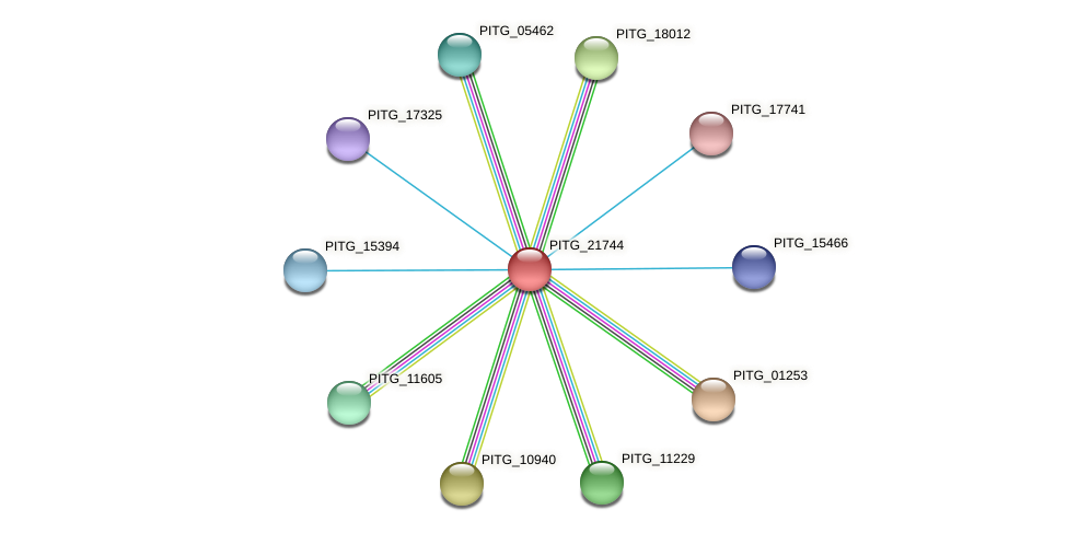 PITG_21744 protein (Phytophthora infestans) - STRING interaction network