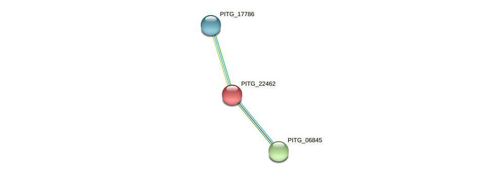 PITG_22462 protein (Phytophthora infestans) - STRING interaction network
