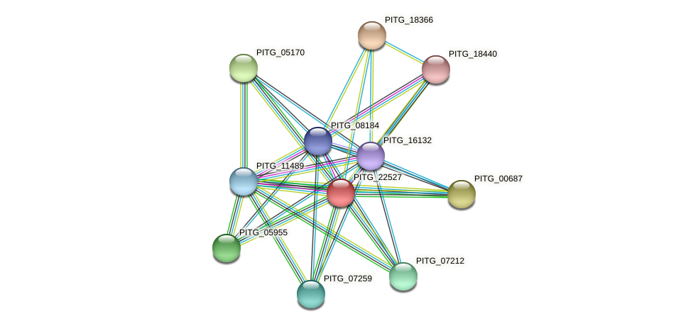PITG_22527 protein (Phytophthora infestans) - STRING interaction network