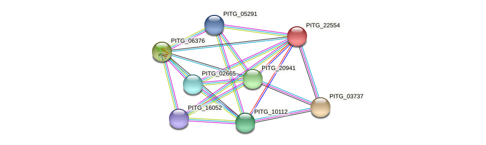 PITG_22554 protein (Phytophthora infestans) - STRING interaction network