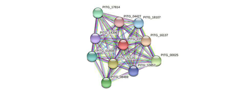 PITG_22566 protein (Phytophthora infestans) - STRING interaction network