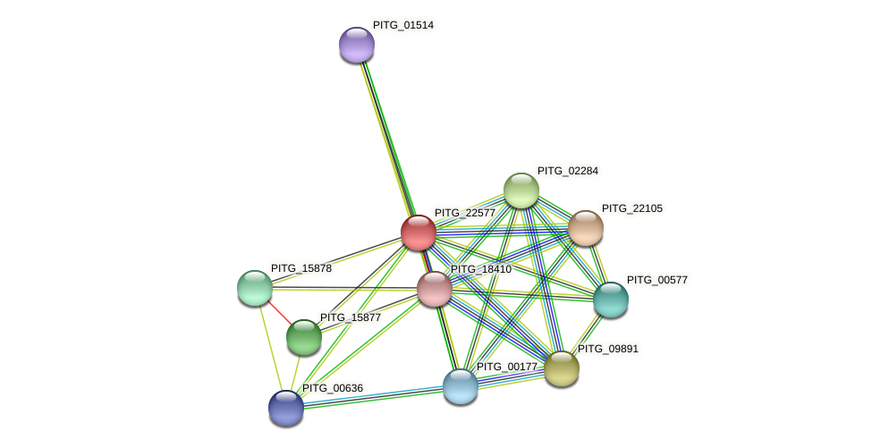 PITG_22577 protein (Phytophthora infestans) - STRING interaction network