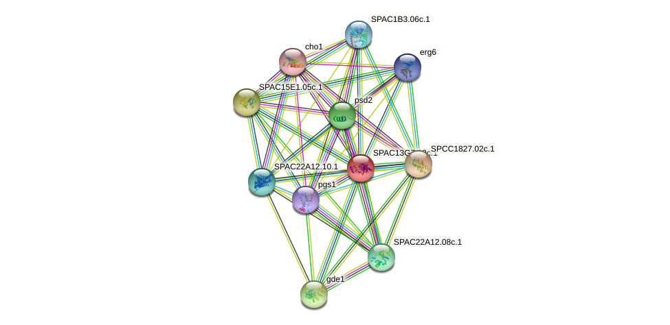 SPAC13G7.12c.1 protein (Schizosaccharomyces pombe) - STRING interaction network