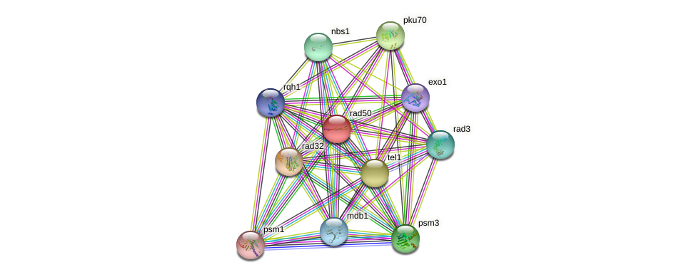 rad50 protein (Schizosaccharomyces pombe) - STRING interaction network