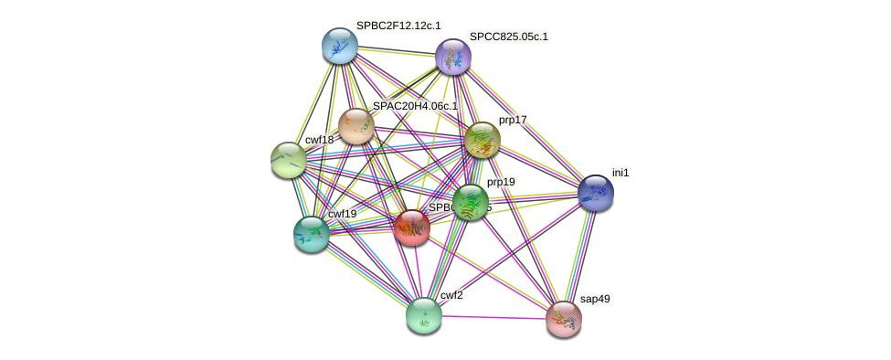 SPBC713.05 protein (Schizosaccharomyces pombe) - STRING interaction network