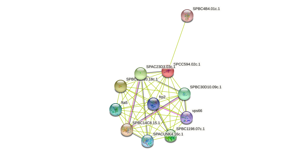 SPCC594.02c.1 protein (Schizosaccharomyces pombe) - STRING interaction network