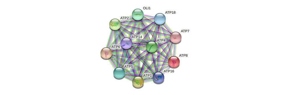 ATP8 protein (Saccharomyces cerevisiae) - STRING interaction network