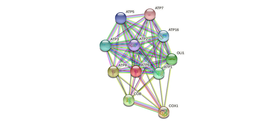ATP6 protein (Saccharomyces cerevisiae) - STRING interaction network