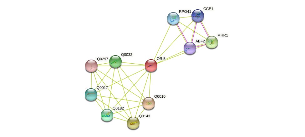 ORI5 protein (Saccharomyces cerevisiae) - STRING interaction network