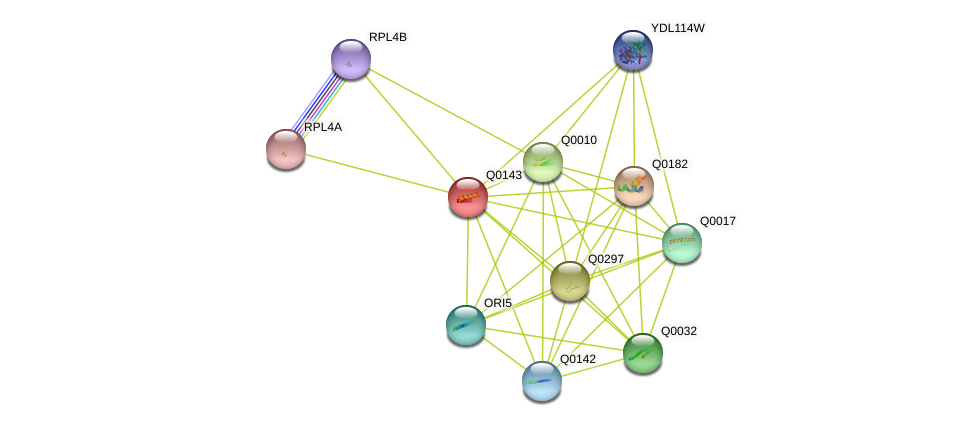 Q0143 protein (Saccharomyces cerevisiae) - STRING interaction network