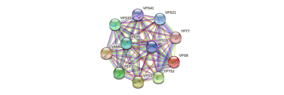 VPS8 protein (Saccharomyces cerevisiae) - STRING interaction network