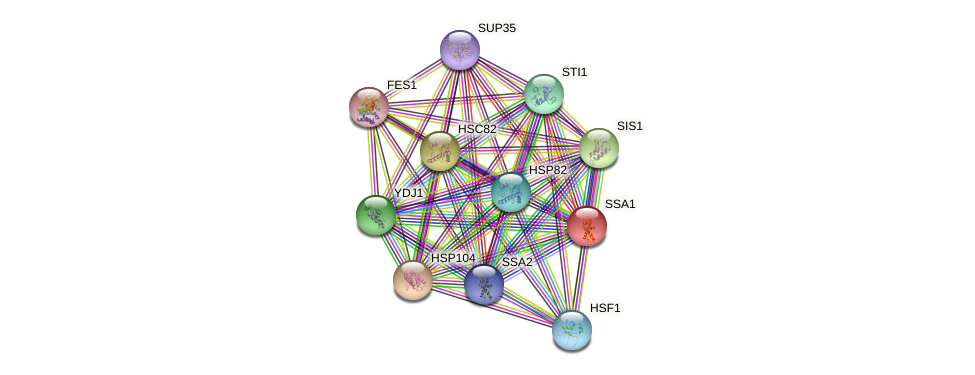 SSA1 protein (Saccharomyces cerevisiae) - STRING interaction network