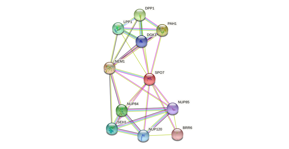 SPO7 protein (Saccharomyces cerevisiae) - STRING interaction network