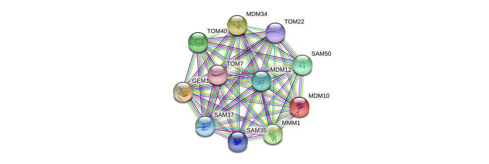 MDM10 protein (Saccharomyces cerevisiae) - STRING interaction network