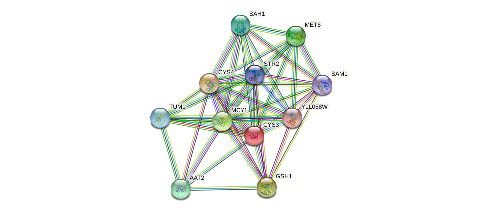 CYS3 protein (Saccharomyces cerevisiae) - STRING interaction network
