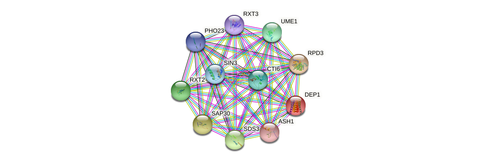 DEP1 protein (Saccharomyces cerevisiae) - STRING interaction network