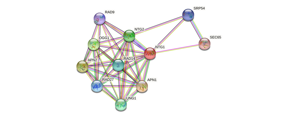 NTG1 protein (Saccharomyces cerevisiae) - STRING interaction network