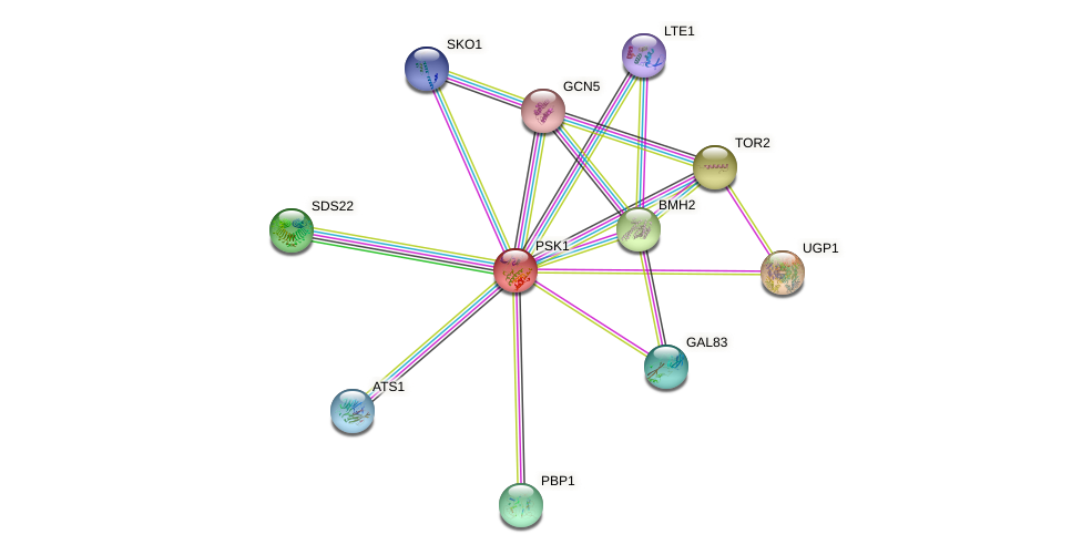 PSK1 protein (Saccharomyces cerevisiae) - STRING interaction network
