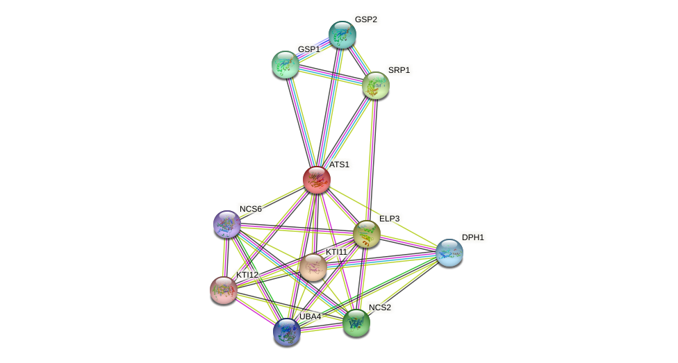 ATS1 protein (Saccharomyces cerevisiae) - STRING interaction network
