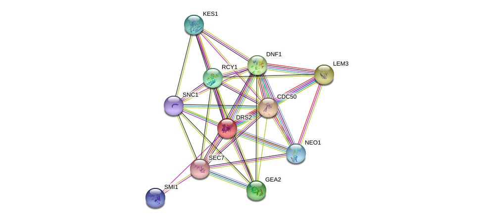 DRS2 protein (Saccharomyces cerevisiae) - STRING interaction network