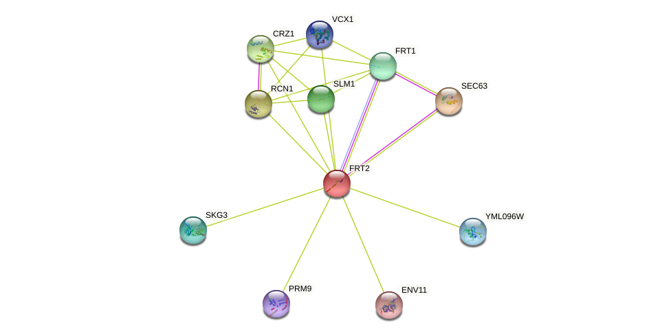 FRT2 protein (Saccharomyces cerevisiae) - STRING interaction network
