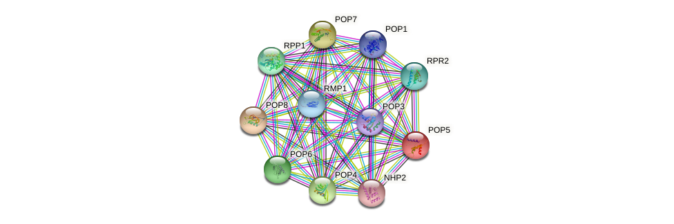 POP5 protein (Saccharomyces cerevisiae) - STRING interaction network