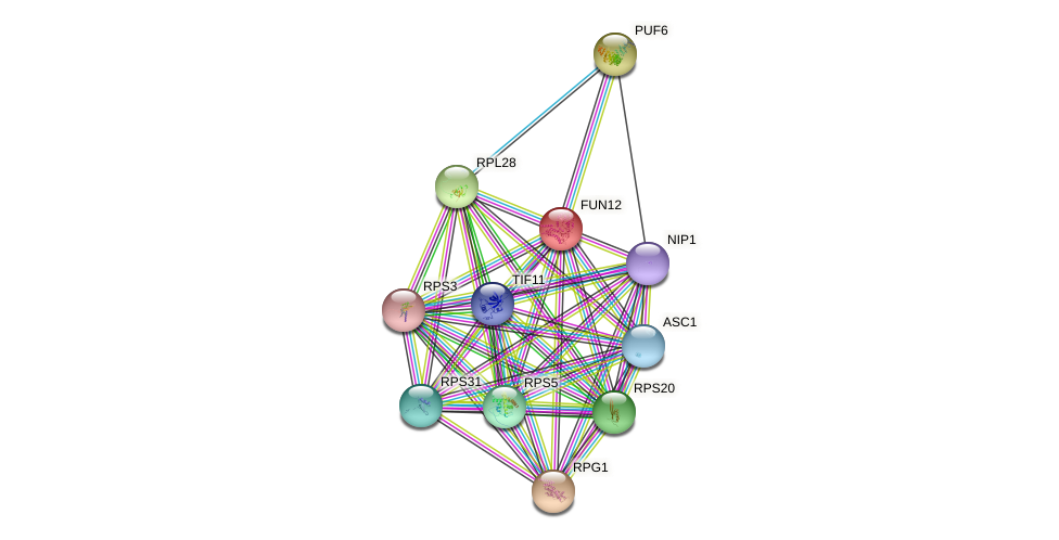 FUN12 protein (Saccharomyces cerevisiae) - STRING interaction network