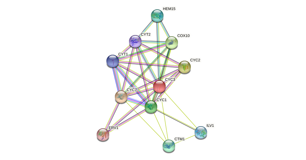 CYC3 protein (Saccharomyces cerevisiae) - STRING interaction network