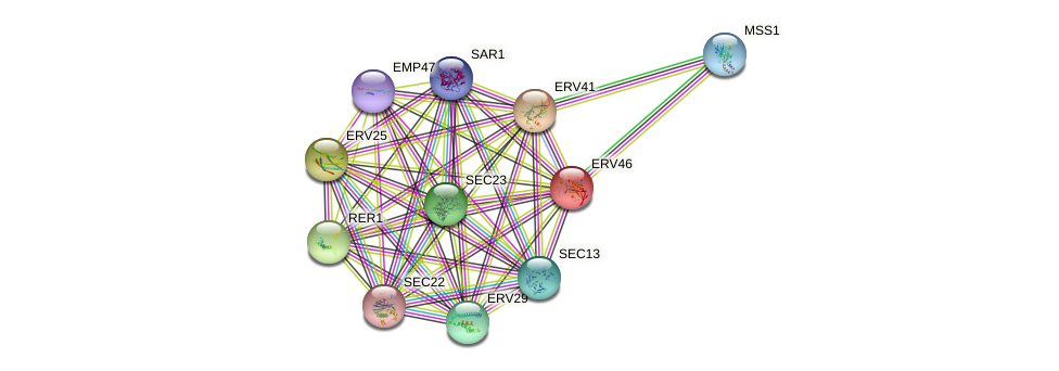ERV46 protein (Saccharomyces cerevisiae) - STRING interaction network