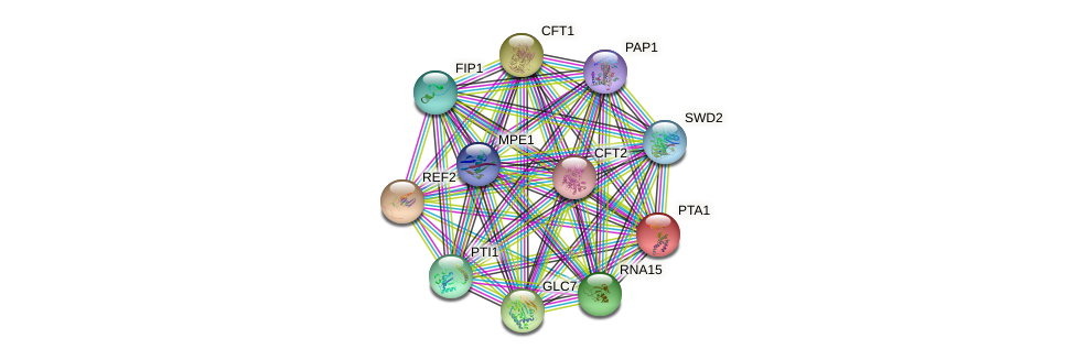 PTA1 protein (Saccharomyces cerevisiae) - STRING interaction network