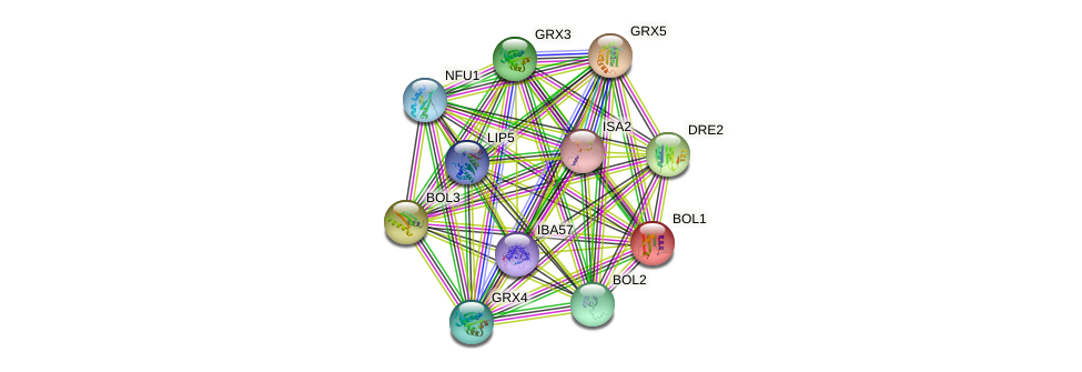YAL044W-A protein (Saccharomyces cerevisiae) - STRING interaction network