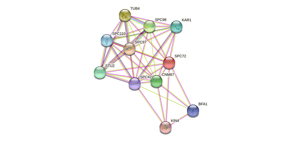 SPC72 protein (Saccharomyces cerevisiae) - STRING interaction network