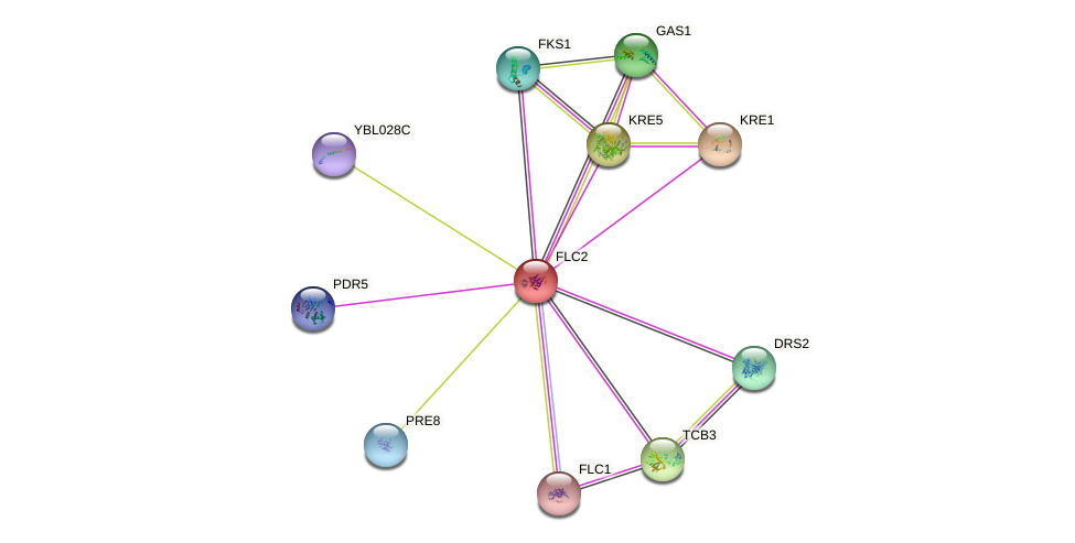 FLC2 protein (Saccharomyces cerevisiae) - STRING interaction network