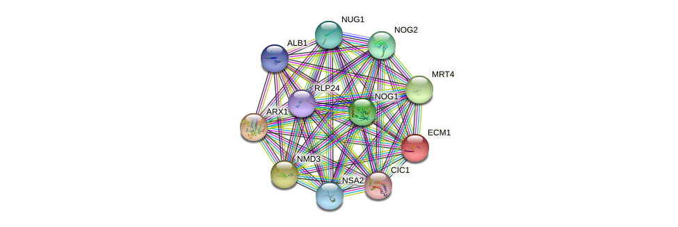 ECM1 protein (Saccharomyces cerevisiae) - STRING interaction network