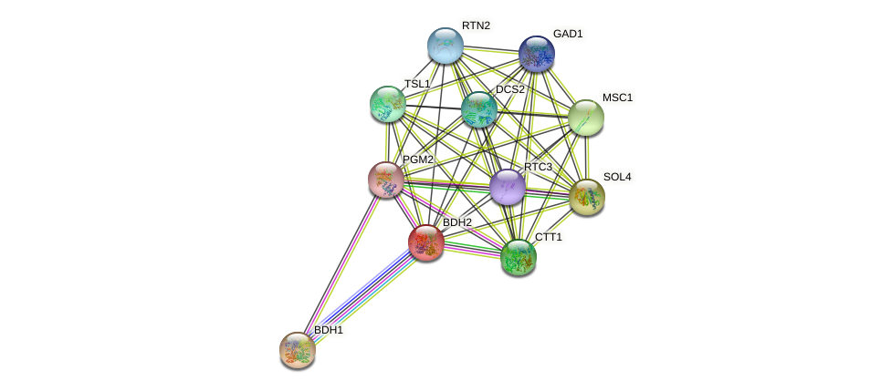 BDH2 protein (Saccharomyces cerevisiae) - STRING interaction network