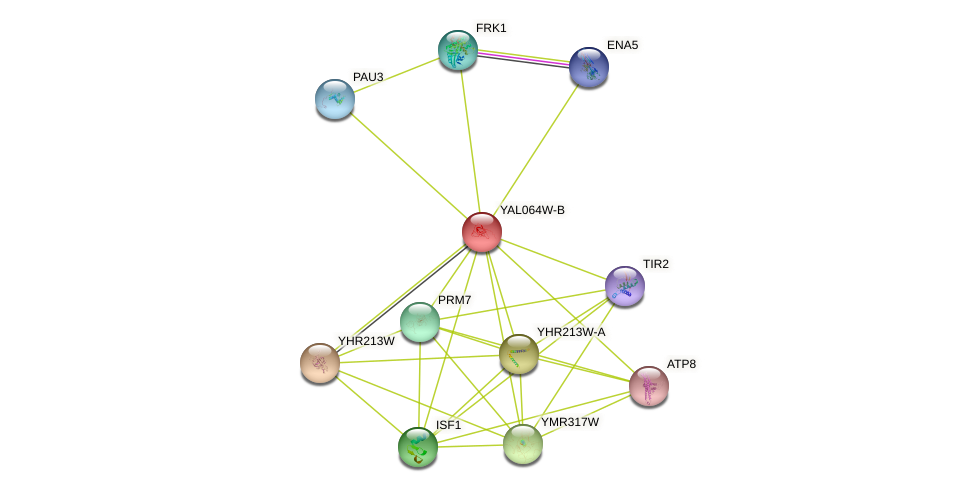 YAL064W-B protein (Saccharomyces cerevisiae) - STRING interaction network