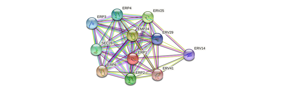 ERP1 protein (Saccharomyces cerevisiae) - STRING interaction network