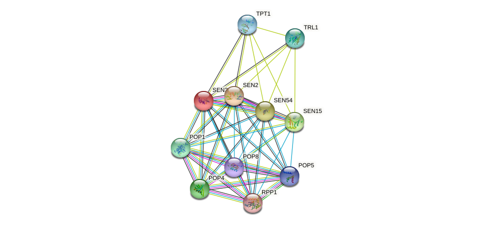 SEN34 protein (Saccharomyces cerevisiae) - STRING interaction network
